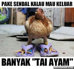 Indonesia Humor Quotes Indonesia Memes Funny Pictures Timeline Islam Motorcycles Funny P Os Motorbikes