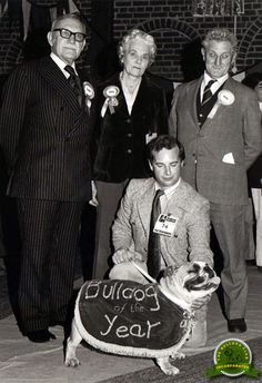Bulldog of the Year 1977 – CH Bellum Premiere. Pinned by Judi Crowe.