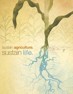 Sustainable Agriculture - rye-jol