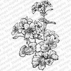 Check out the deal on Geranium Lg at Serendipity Stamps Seed Packets, Flower Cards, Geraniums, Serendipity, Stamps, Paper Crafts, Rubber Stamping, Drawing Ideas, Garden