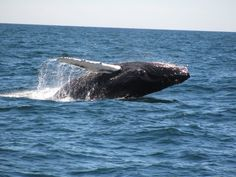 Whale Watch, Provincetown, MA