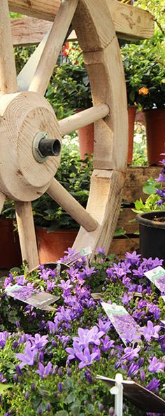 Take a ride in our magic #garden! #inspiration #flower #springtime #Agricola