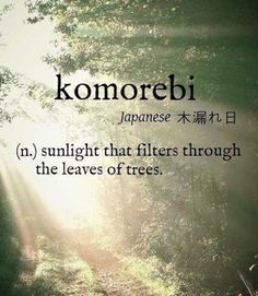 Lost in the words I ponder .komorebi [Japanese 木漏れ日] ~ (n.) sunlight that filters through the leaves of trees. The Words, Weird Words, Cool Words, Words For Love, Unusual Words, Unique Words, Pretty Words, Beautiful Words, Trees Beautiful