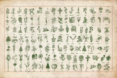 Horticulture - 130 plant vectors by BlackBird Foundry on Creative Market