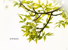Leaves 10 by Wei-San Ooi  on 500px