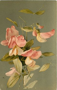 Light pink sweet-peas ~ 1907.