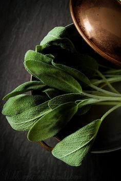 Fresh sage (recipe for butternut squash soup with sage)