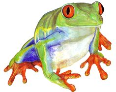 tree frog watercolour painting by Stephanie Kriza