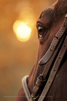 LOVE IT!! I am REALLY like the bridle/eye shots. I think it just accentuates gentle humility in some of these horses. It's like they look to your soul.