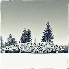 Wood Pile in Folgaria, Trentino, Italy