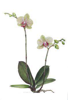 Resultado de imagem para scientific flower oil painting