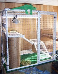 Build a square cage for your iguana using PVC pipe! Cut pieces of pipe to the lengths needed for each section of the frame, then assemble the pipes with PVC connectors. Iguana Cage, Iguana Pet, Bearded Dragon Enclosure, Bearded Dragon Cage, Ferret Cage, Rat Cage, Diy Cat Enclosure, Reptile Enclosure, Pet Enclosures