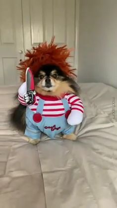 Cute Little Animals, Cute Funny Animals, Funny Dogs, Funny Memes, Funny Animal Videos, Animal Memes, Best Dog Costumes, Scary Halloween Pumpkins, Cute Baby Videos