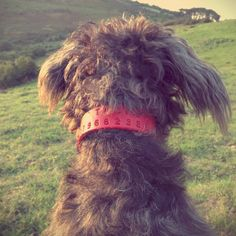 PERSONALISE OUR MONOGRAM COLLAR AND LEAD WITH YOUR NAME & NUMBER. £49