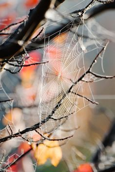 Autumn leaves through a spider web. Spider Art, Spider Webs, Gray Garden, All Nature, Autumn Nature, Nature Tree, Samhain, Belle Photo, Fall Halloween