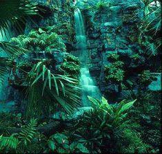 Tropical+Rainforest | tropical rainforest biome