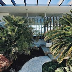 """Strick house in Santa Monica, by Tim Street-Porter.  Much as the architectural renovation, the garden design was more interpretative than historically thorough - inspired by the work of #Niemeyer's long term collaborator Roberto #BurleMarx, according to Michael Boyd himself """"the vegetation was very important because the meaning of the design was based on inside-outside living. Besides, we wanted to bring out the sense that this is a Niemeyer building and imbue it with the feeling of the…"""