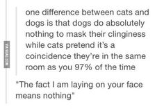 The truth about cats. 《《《 Ok seriously though, my cat is right outside my room. She always does this.