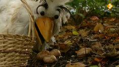 Thema: Herfst & Natuur. De appels bij Raaf en Carlijn zijn beschimmeld. Carlijn leert dat schimmels soms leven van dood plantaardig materiaal. Hoe herken je verschillende soorten paddenstoelen en wat zijn de kenmerken? Sommige paddenstoelen zijn beschermd en je kunt ze lang niet allemaal eten. Carlijn gaat eetbare paddenstoelen halen bij een paddenstoelenkwekerij. In de kwekerij leert Carlijn hoe paddenstoelen het beste groeien en hoe ze gekweekt worden.