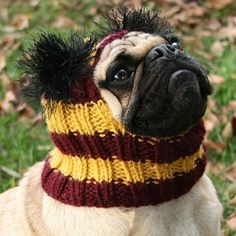 lmao.... gryffindor hat for your pup!