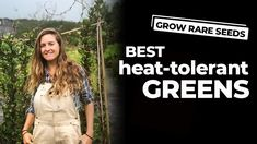 GROW RARE SEEDS | Best Heat-Tolerant Greens - YouTube
