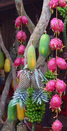 Die Drachenfrucht in Pracht und Farbe!
