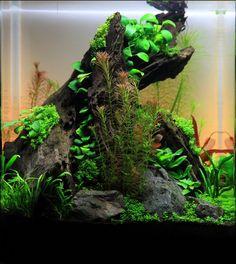 Nano aquascape, © Georg W. Just