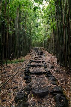 Walk Through the Bamboo Forest - Maui, Hawaii Places Around The World, The Places Youll Go, Places To Visit, Bamboo Forest Maui, Forest Path, Fantasy Places, Nature Photos, Beautiful Landscapes, Cool Pictures