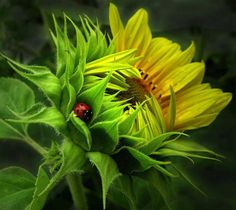 Lady Bug in GREEN ( lovely pic )
