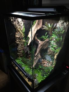 Newest Free of Charge Reptile Terrarium setup Suggestions There's no doubt which developing a puppy will bring uncounted pleasure in order to a persons life. Gecko Habitat, Reptile Habitat, Reptile Room, Reptile Cage, Gecko Terrarium, Terrarium Reptile, Garden Terrarium, Les Reptiles, Cute Reptiles