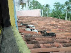 Cats on the roof - Olinda - Brazil  It is not from Street View.