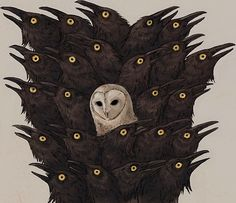 Crows Ravens:  #Crows with owl.