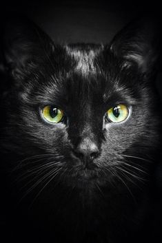 Photograph An Cat Dubh (The Black Cat) by Patrick Laberge on 500px