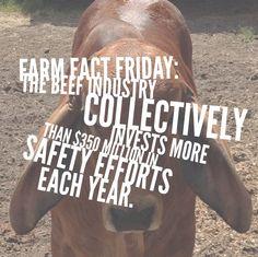 Farm Fact Fun! #beef #safety
