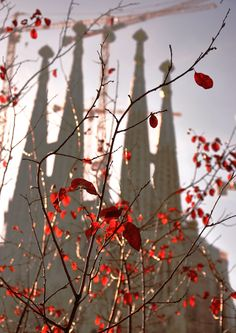 Autumn / La Sagrada Familia in Barcelona