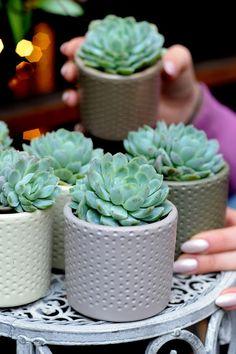 Succulents, Planter Pots, Succulent Plants