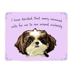 tiny confessions from the dog