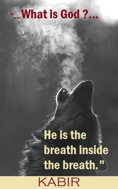 Funny pictures about Wolf howling in the cold. Oh, and cool pics about Wolf howling in the cold. Also, Wolf howling in the cold photos. Beautiful Creatures, Animals Beautiful, Beautiful Wolves, Simply Beautiful, Majestic Animals, Beautiful Morning, Beautiful Soul, Absolutely Gorgeous, Animals And Pets