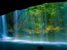 лес, водопад