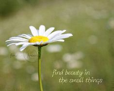 Image result for daisy quotes