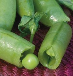 Super sugar snap peas from Johnny's seeds