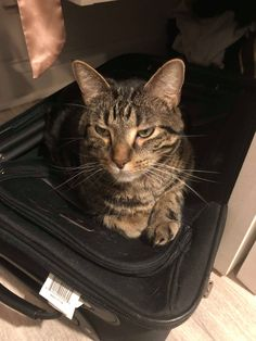 The other #BusinessCat #IndyYoung missed us as well. He immediately jumped on our luggage to prevent us from leaving again. #RYM #Cats #HappyToBeHome #BackInAction
