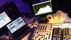 Visitor in the music  studio