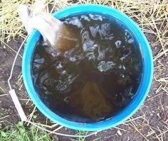 Brew compost Tea The Easy Way: Compost tea is the best fertilizer you can get, and it is totally natural and organic. Brewing this wonderful concoction yourself is an easy way to supercharge your vegetable garden. yard-and-garden Garden Compost, Veg Garden, Garden Soil, Edible Garden, Lawn And Garden, Garden Plants, Vegetable Gardening, Harvest Garden, Permaculture