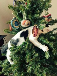 Why are these things here?this is MY tree!