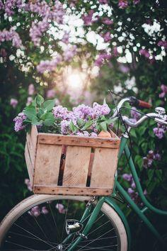 All Flowers, Beautiful Flowers, Call Me Cupcake, Ice Cream 1, Summer Berries, Paper Stars, Chocolate Hazelnut, Chocolate Cake, Pavlova