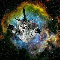"""And God Said, """"Let There Be Cats"""""""