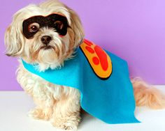 Super Hero Costumes for Dogs