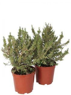 Planter Pots, 21st, House Beautiful, Planters, Plants