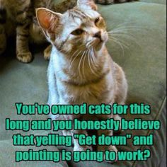 you've owned cats for this long and you honestly believe that yelling get down and pointing is going to work?